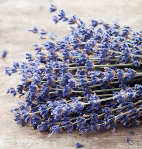 dried lavender for wholesale