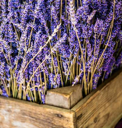 boxes of lavender for sale