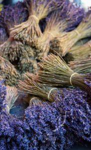 wholesale lavender for sale
