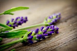lavender on wooden table