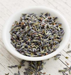 english culinary lavender for sale