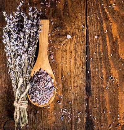 cooking lavender for sale