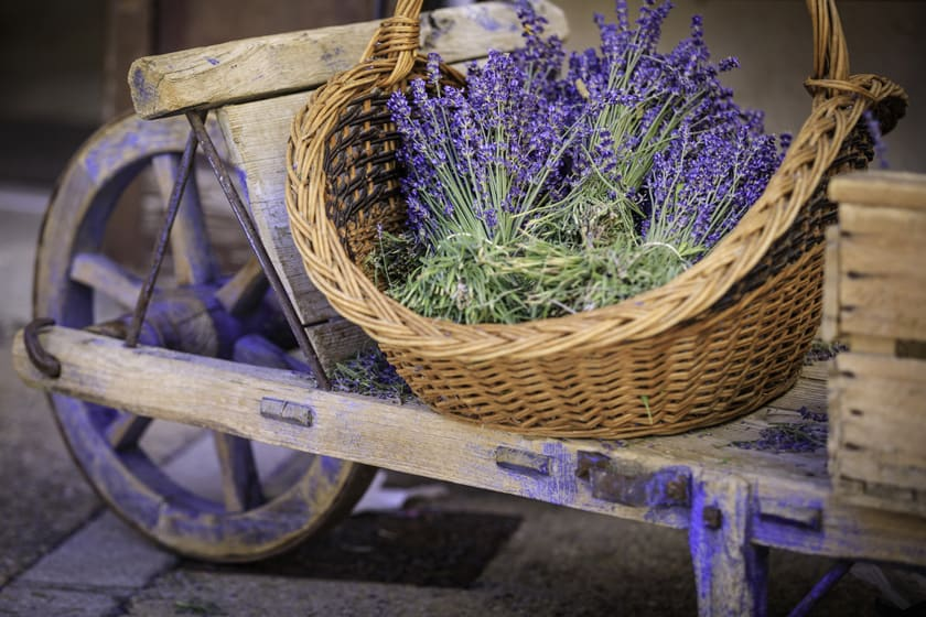 How To Care For Your Fresh Cut Lavender