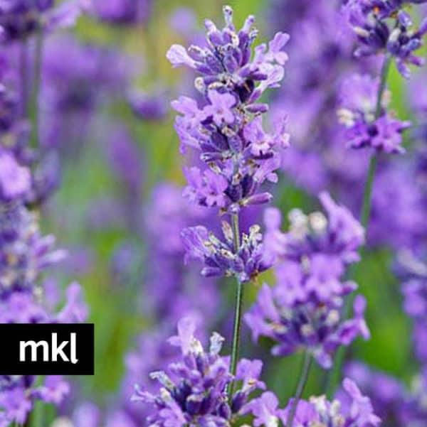 folgate-lavender-mkl-large