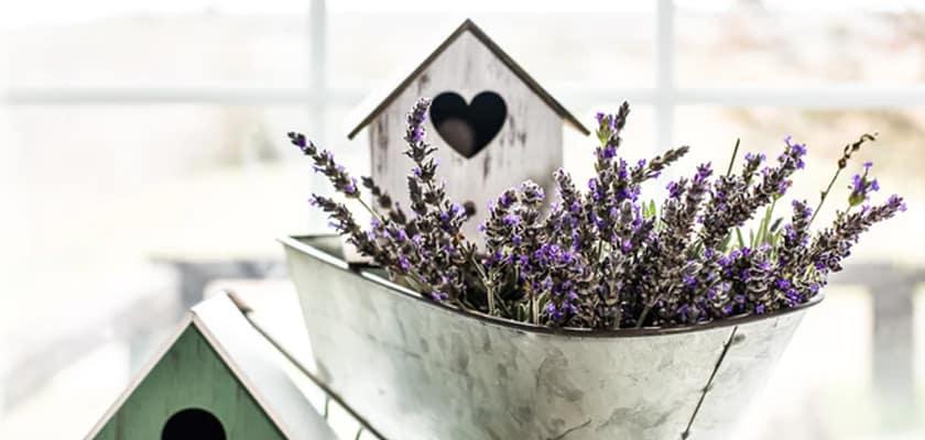 lavender oil for sleep,pure lavender oil,fresh lavender