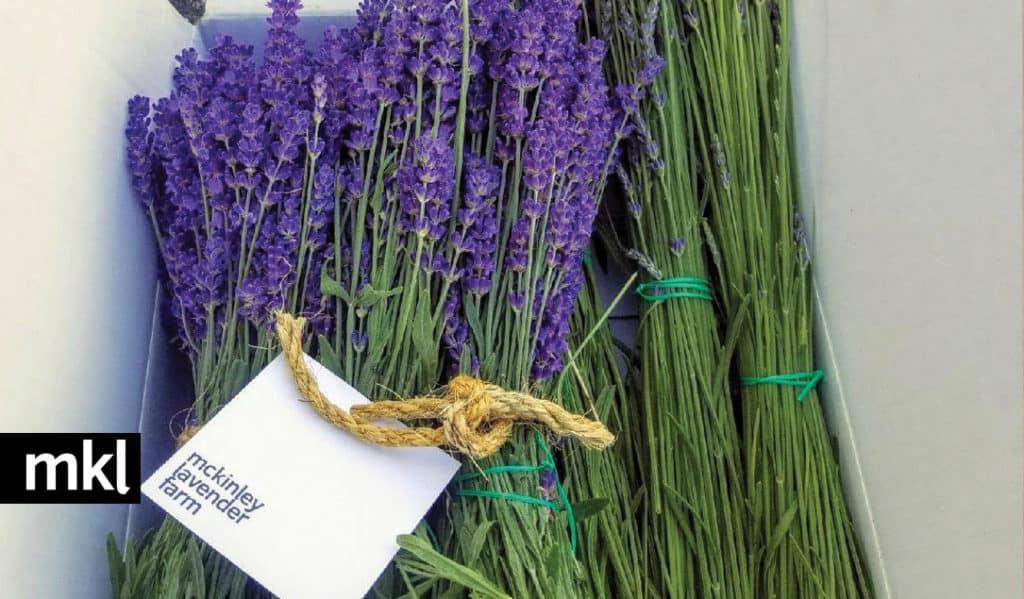 fresh local lavender bundles