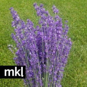 fresh lavender bundles kelowna