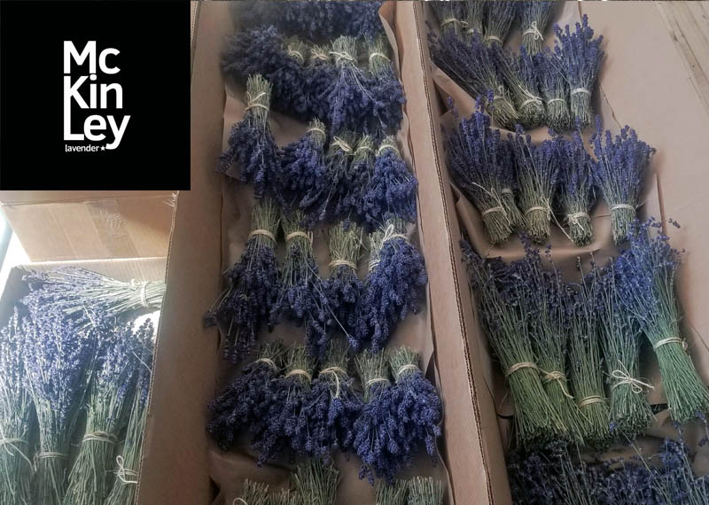 dried lavender for sale Canada
