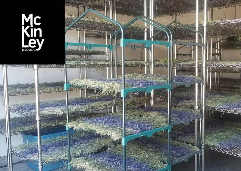 dried lavender bundles for sale